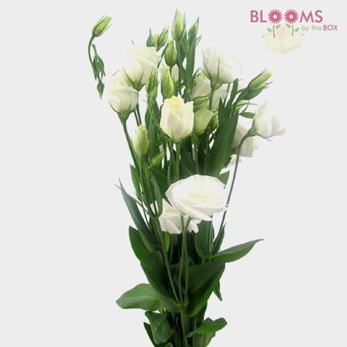 White Lisianthus Flower