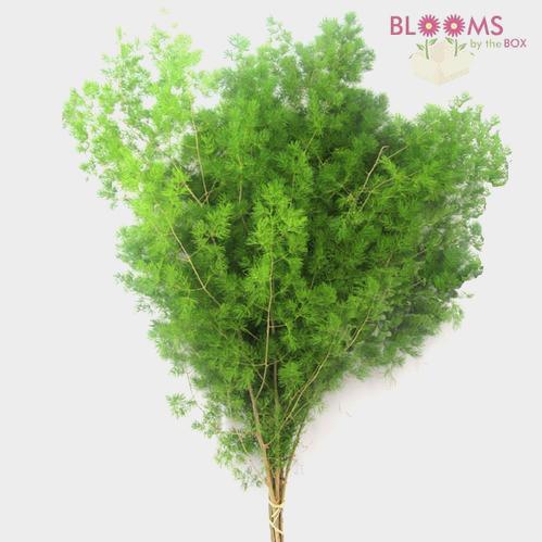 Ming Fern Greens