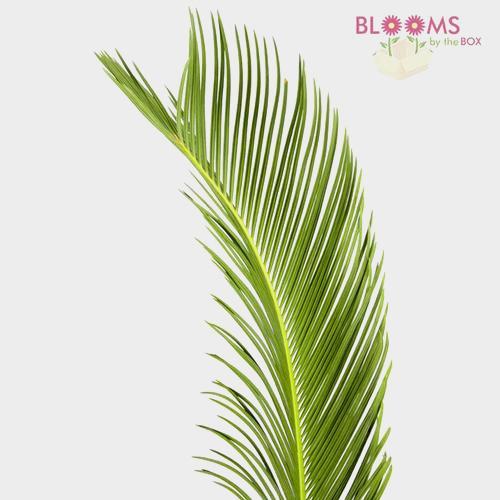 Sago Palm Greens
