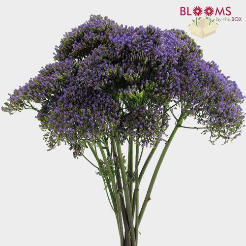 Trachelium Purple Flowers