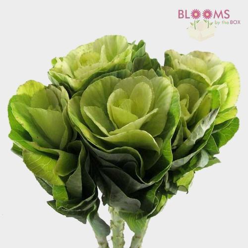Kale White Flower