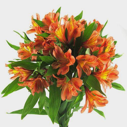 Orange Alstroemeria Flower