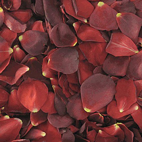 Red / Brown FD Rose Petals (30 Cups)