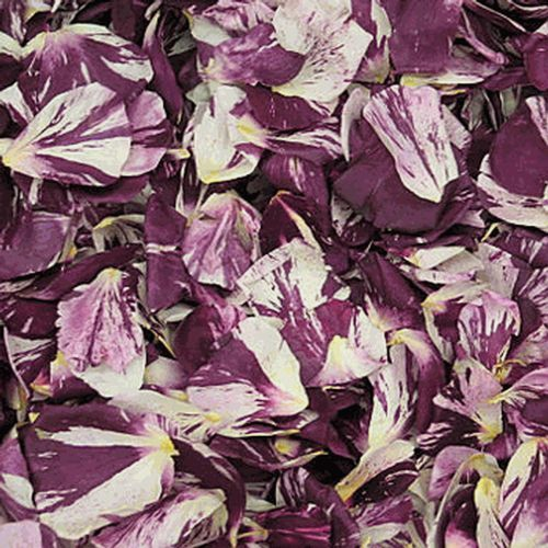 White / Deep Red Fd Rose Petals (30 Cups)