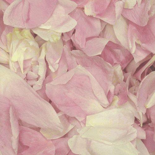 Blush FD Peony Petals (30 Cups)