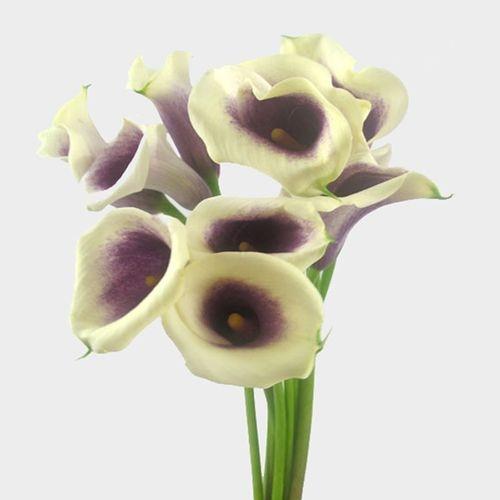 Calla Lily Mini Picasso Flower