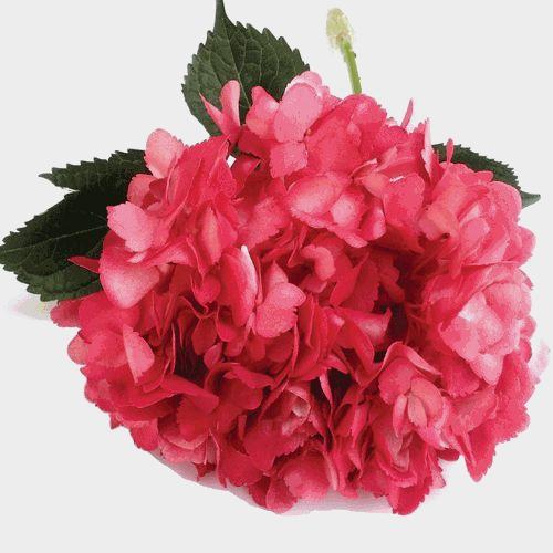 Spray Tinted Hydrangea - Dark Pink