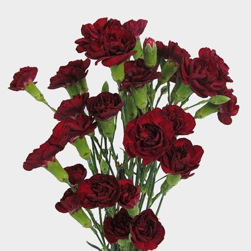 Burgundy Mini Carnation Flowers