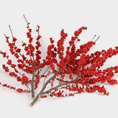Ilex Berries Bunch