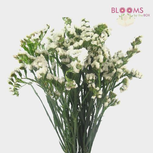 Statice White Flower