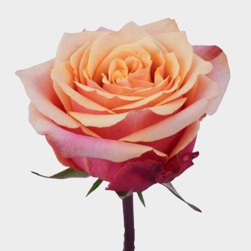 Rose Cherry Brandy 50 cm.