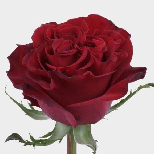 Rose Hearts 50 cm.