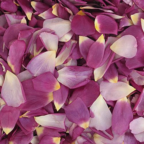 Love Affair Purple Rose Petals (30 Cups)