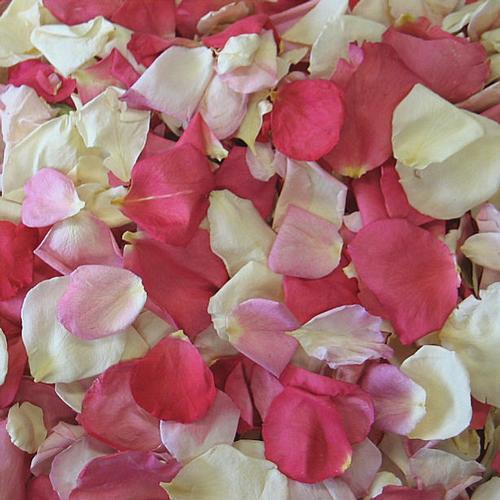 Pretty In Pink Freeze Dried Rose Petals (30 Cups)