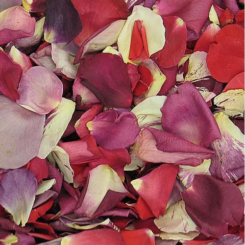 Lasting Love Fd Rose Petals (30 Cups)