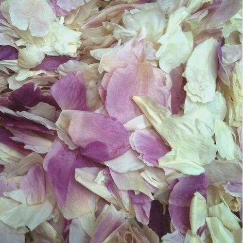 Ivory Pink Fd Peony Petals (30 Cups)