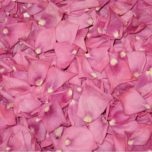 Pink Fd Peony Petals (30 Cups)