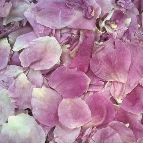 Light Fuchsia Fd Peony Petals (30 Cups)