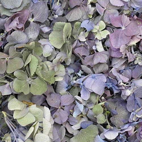 Lavender / Green Fd Hydrangea Petals (30 Cups)