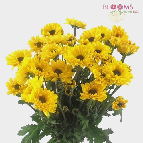 Vyking Yellow Mum Flowers