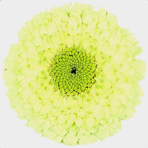 Gerpom Green Flower