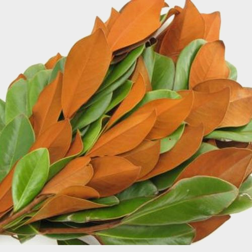 Magnolia Tips Greenery