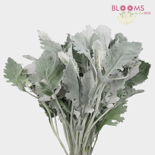 Modern Filler Flowers Bulk Pack