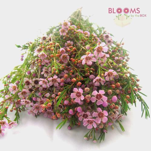 Pink Filler Flowers Bulk Pack