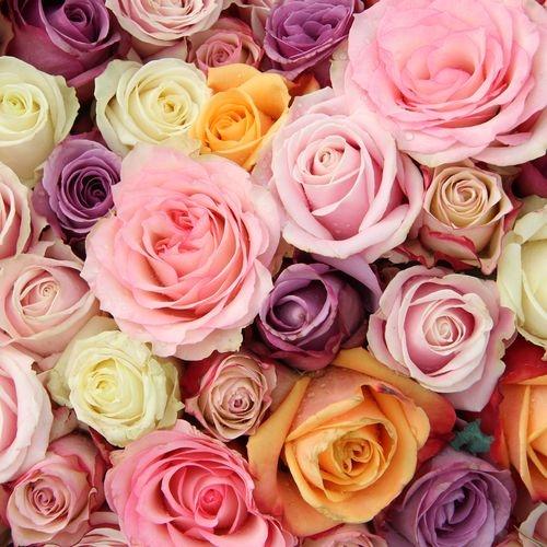 Rose Assorted Colors 60cm Bulk