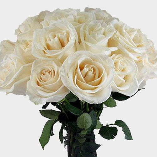 Rose Bouquet 12 Stem - White Vendela 50 cm